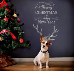 http://www.lifewithdogs.tv/2014/12/beautiful-photos-of-dogs-at-christmastime/