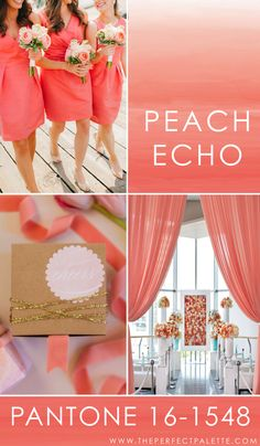 Looking for your wedding color palette? The Perfect Palette wants to help! The Perfect Palette is dedicated to helping you see the many ways you can use color to bring your wedding to life. Wedding Color Pallet, Wedding Color Schemes, Pantone Color, Pantone 2016, Spring Wedding Colors, Peach Colors, Decoration, Wedding Inspiration, Wedding Ideas