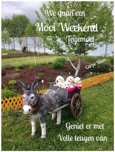 George Block shared La Passion & L'Amour Des Animaux's photo to the group: Donkey Breed Society . Weekender, Donkey Breeds, Baby Animals, Cute Animals, Special Pictures, All Things Cute, Cute Animal Pictures, Baby Sleep, Pet Birds