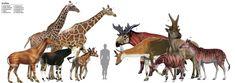 #prehistoricage #prehistoric #age #prehistoric #age #media Prehistoric Wildlife, Prehistoric World, Prehistoric Creatures, Stone Age Animals, Animals Beautiful, Cute Animals, Jurassic, Okapi, Extinct Animals
