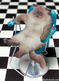 Kitty pedicure.    #cat