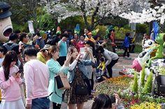 목포시, 2017 꽃피는 유달산축제 개최