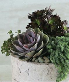 Succulents are ideal for absentminded gardeners; the plants will thrive even if you forget to water them.