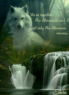 So true Wolf Qoutes, Lone Wolf Quotes, Animal Spirit Guides, Wolf Spirit Animal, Wolf Images, Wolf Pictures, Teen Wolf, Indian Wolf, Native American Wolf
