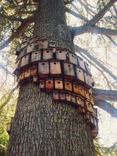 bird houses, I love this idea of clumping them together around a tree. House Martins may find this set up accommodating.