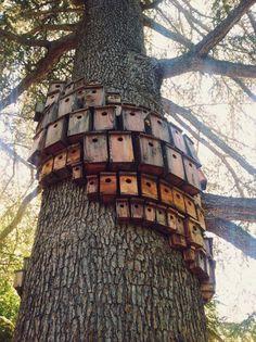 the avian version of high-rise tower blocks? #homesfornature