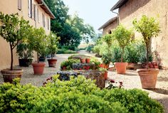 Gorgeous courtyard with potted trees and bushes