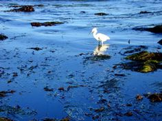 27 Best Tide Pools Images Tide Pools Places To See