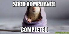 compliance SOX