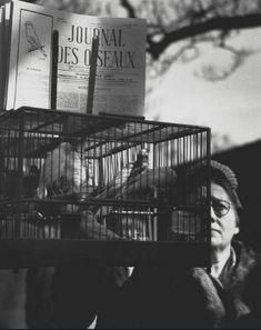 Herbert List Bird Market, Paris 1937 Types Of Photography, Modern Photography, Amazing Photography, Street Photography, Otto Steinert, Herbert Matter, Nickolas Muray, Herbert List, Robert Doisneau