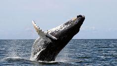 Support a Permanent Whale Sanctuary - ForceChange