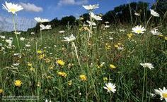 Google Image Result for http://ichef.bbci.co.uk/naturelibrary/images/ic/credit/640x395/m/me/meadow/meadow_1.jpg