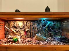 Want to bring a beardie home but not sure which bearded dragon cage or tank to go for? Bearded Dragon Terrarium, Bearded Dragon Cage, Window Ventilation, Bearded Dragon Enclosure, Large Terrarium, Glass Cages, Baby Dragon, Pet Shop, Habitats
