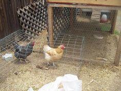 DIY chicken tunnel system makes chickens do the gardening – DIY projects for everyone! Backyard Chicken Coop Plans, Portable Chicken Coop, Best Chicken Coop, Building A Chicken Coop, Chicken Runs, Chickens Backyard, Chicken Rearing, Chicken Tunnels, Chicken Coop Blueprints