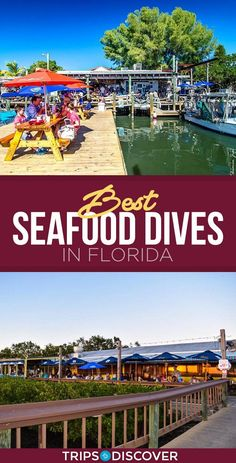 Florida's array of no-frills seafood spots along the coast lure you in with a delectable selection of fresh, boat-to-table cuisine. Boasting Old Florida vibes, here are the best seafood dives in Florida. Florida Vacation Spots, Visit Florida, Florida Living, Sarasota Florida, Old Florida, Florida Travel, Florida Beaches, Vacation Destinations, Travel Usa