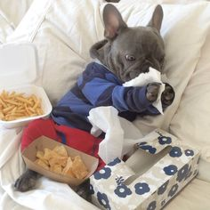 If you are a proud owner of the most beautiful creature, french bulldog, then this is the most important web page you'll ever find. Here is why: