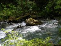 Duckabush River (10.6 mi roundtrip, East Olympics)- Includes Big Hump and Small Hump with options for shorter hikes