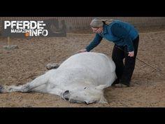 Zirkuslektion: Das Liegen (www.pferde-magazin.info) - YouTube