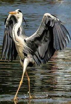 41 Ideas Nature Animals Birds Guys For 2019 Pretty Birds, Beautiful Birds, Animals Beautiful, Funny Animal Memes, Funny Animals, Cute Animals, Exotic Birds, Colorful Birds, All Birds