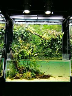 nature aquarium,Takashi Amano 天野尚 - Another! Tropical Fish Aquarium, Nature Aquarium, Paludarium, Takashi Amano, Aquariums, Reptile Room, Reptile Cage, Reptile Enclosure, Aquarium Terrarium