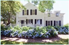 house colors with hydrangea garden