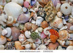 shells shells shells