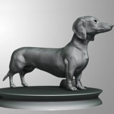Detailed Dachshund Dog | 3D model