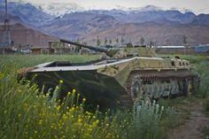 An old Russian tank gets swallowed by a potato field, Bamyan province.