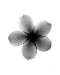 Image result for flower x ray