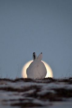 bunny sunrise ..cute share moments