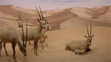Diorama Artists | Natural History Museum of Los Angeles