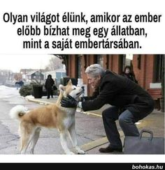 Ez a hátchi című filmben volt 😊🐕 Animals And Pets, Cute Animals, Hachiko, Dog Quotes, Akita, Little Dogs, Positive Thoughts, Funny Pictures, Sad