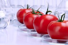 The Argument for Genetically Modified Foods