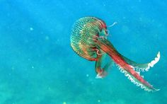 Unique jellyfish | ... sea jellyfish 34875 600x450 38+ Unique Mediterranean Photographs