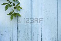 Feuilles vertes sur fond en bois bleu Banque d'images - 9900026