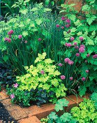 Hasznos tippek fűszernövények tavaszi vetéséhez - Fűszernövények - Konyhakert Garden, Plants, Garten, Lawn And Garden, Gardens, Plant, Gardening, Outdoor, Yard