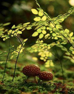 Tiny, nature gardens everywhere.