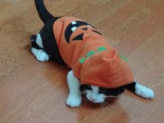 Pin for Later: Your Comprehensive Guide to Dog and Cat Halloween Costumes Pumpkin