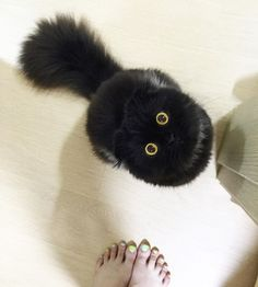 Well, this raven-haired feline looks like a black soot that's come alive! Funny Cats, Funny Animals, Cute Animals, Foster Kittens, Cats And Kittens, Black Kittens, Kitty Cats, Cute Black Cats, Crazy Cat Lady