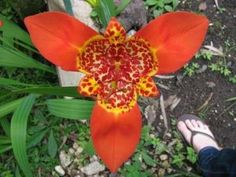 Live and Invest Overseas  Flowers in Panama are like nothing you've ever seen before!