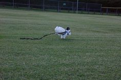 Bunny Gets Free Rein of the Sports Field