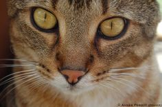 Cat by © Agnes PERROT, via Flickr