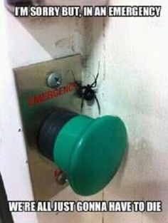 Spiders are not funny