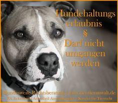 American Staffordshire Terrier #Listenhund #Kampfhund #Haltungserlaubnis #Hunderechtsanwalt #Ackenheil #tieranwalt hundehaltungserlaubnis_anwalt_ackenheil http://www.der-tieranwalt.de dog hund