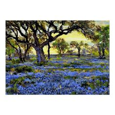 Onderdonk - Old Live Oak Tree and Bluebells Postcard - oak gifts tree leaves style nature gift idea cyo Alamo Heights, Live Oak Trees, Tree Leaves, Custom Posters, Art Posters, Blue Bonnets, Tree Art, Postcard Size, Adulting