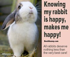 Knowing your rabbit is happy, can never fail to make you happy! www.best4bunny.com
