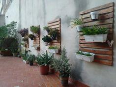 Foto de Varias plantas (desde 1)