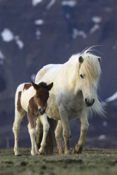 Hi all, nice video to watch pets fashion. https://www.youtube.com/watch?v=2v-agtRjdOQ All About Horses, Ponys, Zebras, Mini Horses, Baby Horses, All The Pretty Horses, Beautiful Horses, Animals Beautiful, Baby Pony