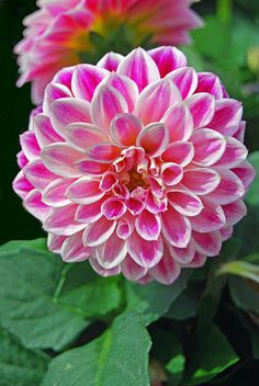 Glorious Enjoy Life With Your Own Flower Garden Beautiful Easy Ideas. Enjoy Life With Your Own Flower Garden Beautiful Easy Ideas. Flowers Nature, Exotic Flowers, Amazing Flowers, Pink Flowers, Beautiful Flowers, Dahlia Flower, Flower Art, Different Types Of Seeds, Indoor Flowering Plants