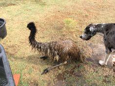 Emu and Layla